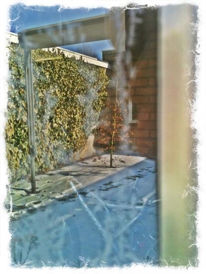 Wintertuin - © Marion
