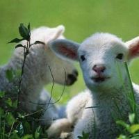 Zes Woorden met Beeld-uitdaging: Lente