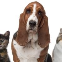 Verbeeld een Verhaal in Zes Woorden: Huisdieren