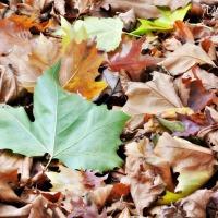Verhaal in zes woorden met beeld: Herfst