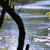 Japans Gedicht: Spiegelingen