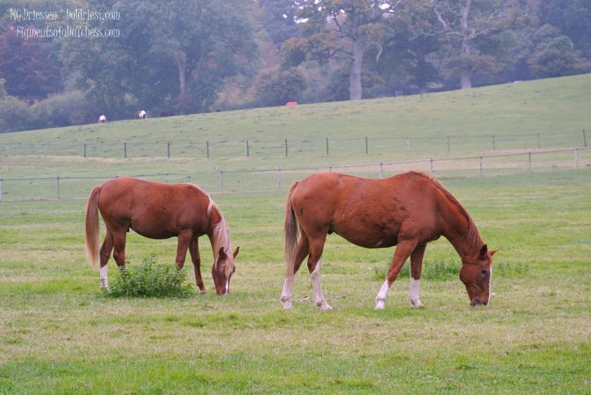 161024-paard1