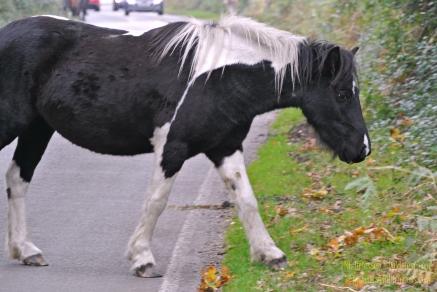 161024-paard4