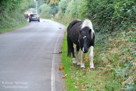 161024-paard5