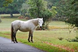 161024-paard7