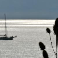 Japans Gedicht: ZeeSpiegel
