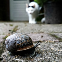 Japans Gedicht: Globetrotter