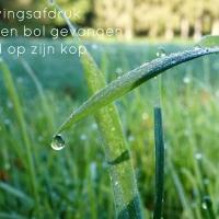 Japans Gedicht: Glazen Bol