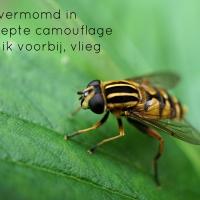 Japans Gedicht: Zweefvlieger