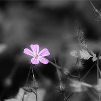 Verborgen schoonheid