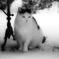 Zwart-wit in zwart-wit