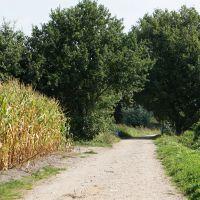 Grafheuvels op Brabantse heide
